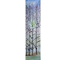 A Feild Of Trees Photographic Print