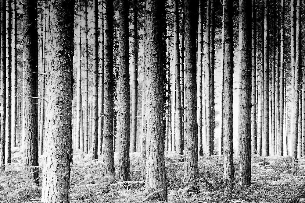 Pine Forest by Anne Staub