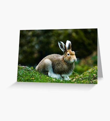 mountain hare (lat. Lepus timidus) Greeting Card