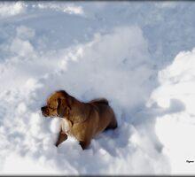 Snow Puggles  by ArtbyDigman
