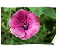 Early Summer Blooms Impressions - Bright Pink Malva Poster