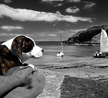 Lazing Around by Graham  Cormie
