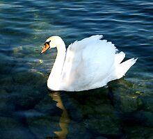 Swan by Naddl