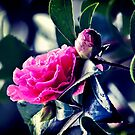 Camellia in the Rain by Vicki Field