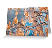 great sparrows in winter time on a branch Greeting Card