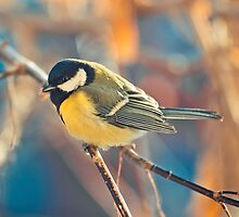 great titmouse in winter time on a branch by Oksana Ariskina