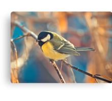 great titmouse in winter time on a branch Canvas Print