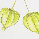 Green Chinese Lanterns Watercolor Pencil Art by cathy savels