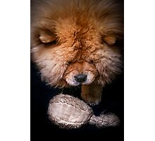 Chow-Chow - The Player Photographic Print