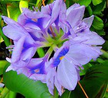 Kaleidoscope of Flowers by Allison Rainey