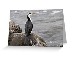 Little Pied Cormorant ~ .... Been here before .... Greeting Card