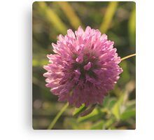 Red Clover Macro Canvas Print