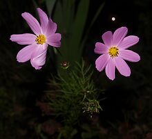 pretty in lavender by steve keller