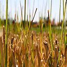 Grass by HeidiD