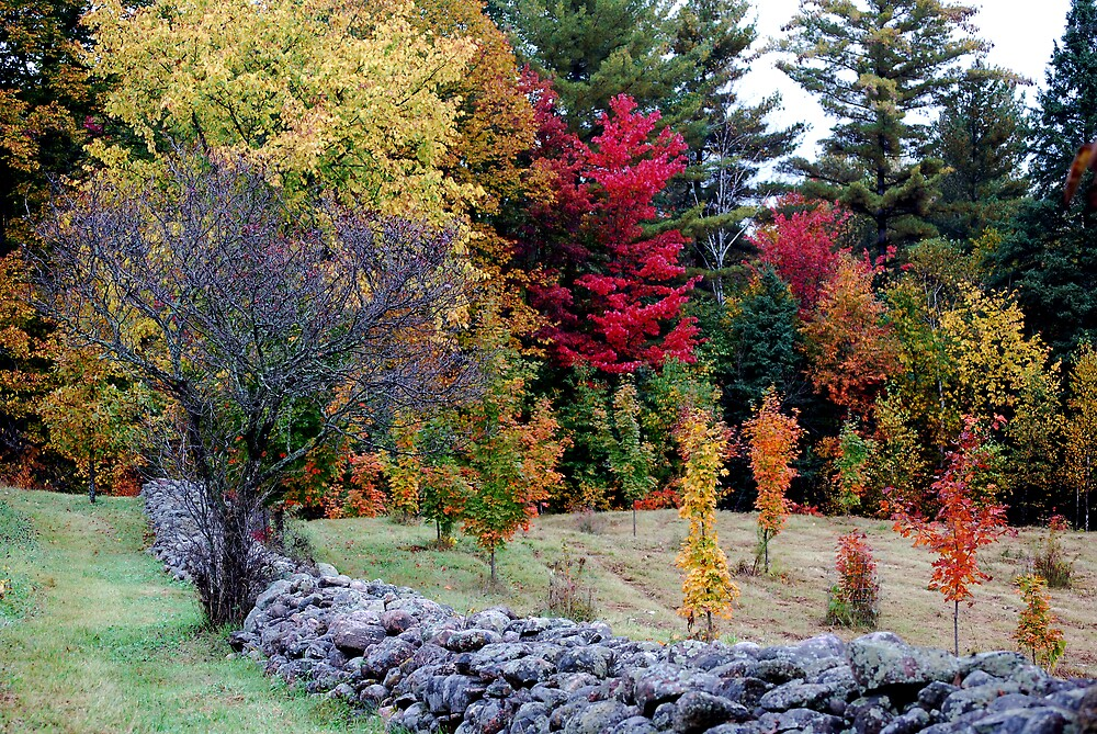 Rock Fence and Colours by Robert Goulet
