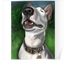 Lola English Bull Terrier Painting 2 Poster