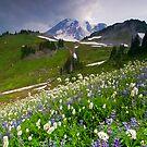 Lupine Storm by DawsonImages