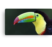 Keel-billed Toucan - Costa Rica Canvas Print