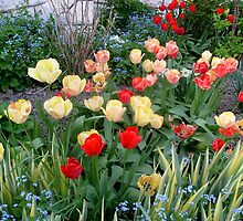 A small ,small garden with tulips by Ana Belaj