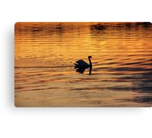Swan on golden pond Canvas Print