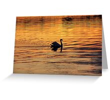 Swan on golden pond Greeting Card