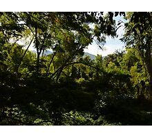 jungle - selva Photographic Print