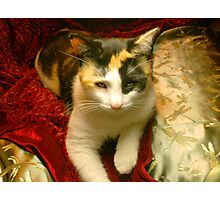 Calico Photographic Print
