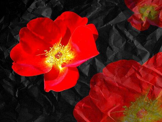 Crumpled Roses by digitalmidge