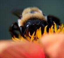 Bee's Eye View by Lolabud