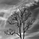 Naked Tree by Steven  Siow