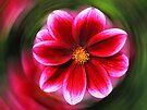 Dahlia - red by Evelyn Laeschke