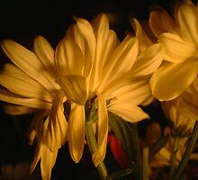 Media Flower by Steve Lichuk