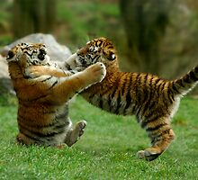 Tiger Cub Tumbles by Captivelight