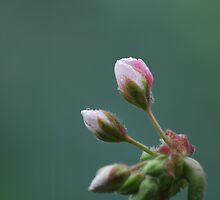 precious rain. by Amy Simons