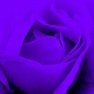 Heart of a Purple Rose :) by Honor Kyne