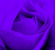 Heart of a Purple Rose :) by Honor Kyne
