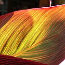 Canvas Leaf by Tom Newman