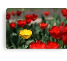Yellow and Red... Canvas Print