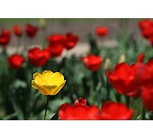 Yellow and Red... Photographic Print