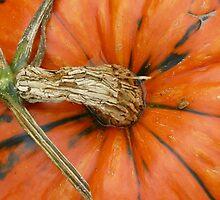 Gourd by AiShan