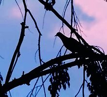 Mourning Dove in Silhouette by Nadya Johnson