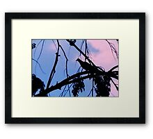 Mourning Dove in Silhouette Framed Print
