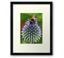 Bee on blue Framed Print