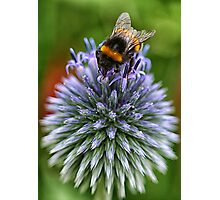 Bee on blue Photographic Print