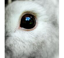 Clovers eye Photographic Print