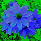 Bright Blue Blooms by missmoneypenny