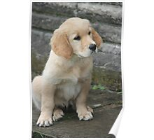 Perfect Puppy Poster