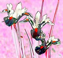 Floral Abstract by Myrddin