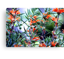 Incredible Orange Flowers Canvas Print