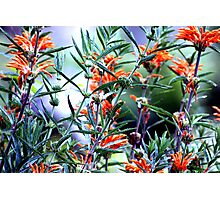 Incredible Orange Flowers Photographic Print